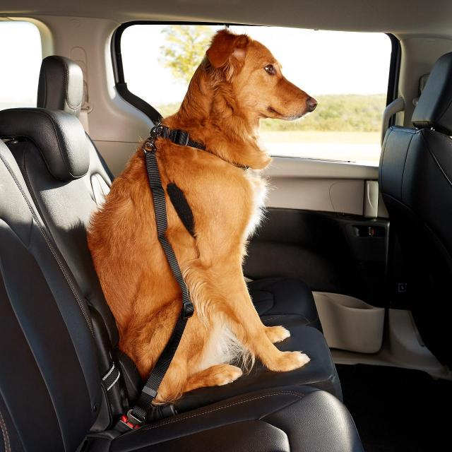 2 Adjustable Nylon Seat Belt Restraint Harnesses for Dogs for $2.99